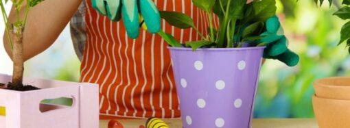 Как определить, какой размер горшка подходит для комнатного растения?