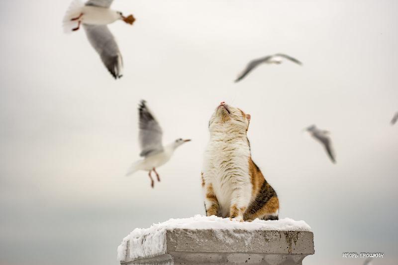 одесская кошка охотится на чаек