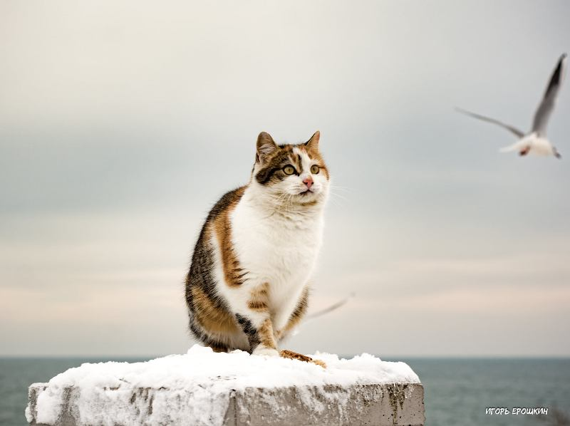 Кошка, море, чайки