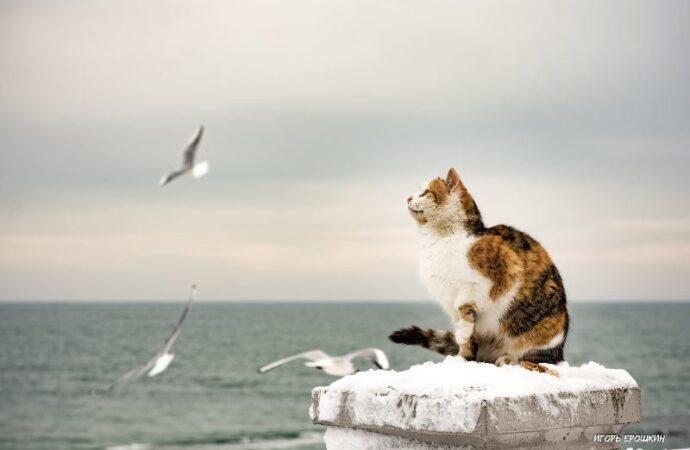 Одесские котики: трехцветная охотница на чаек стала звездой интернета (фото)