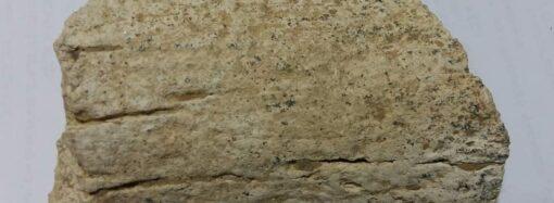 В одесском нацпарке нашли останки древнего животного (фото)