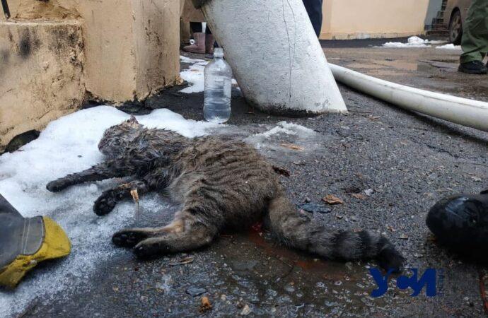 На пожаре в Одессе не дали погибнуть «хвостатику» (видео)