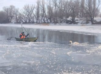 Под Одессой спасли лебедя, вмерзшего в лед на реке