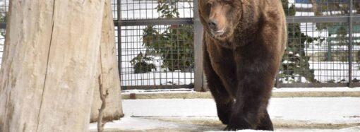 Весна близко: в Одесском зоопарке вышел из спячки медведь (фото)