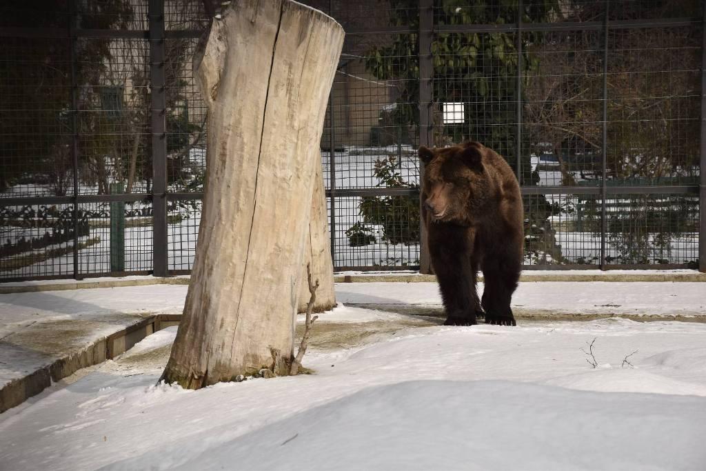 В Одесском зоопарке пробудился от спячки медведь