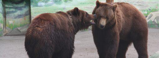 День святого Валентина: в Одесском зоопарке выбрали пару года (фото)