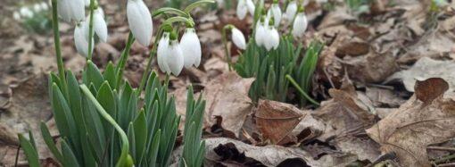 Какая погода ждет одесситов во второй мартовский день?
