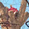 Одесские коммунальщики спасают исторический тополь на Торговой (фото)