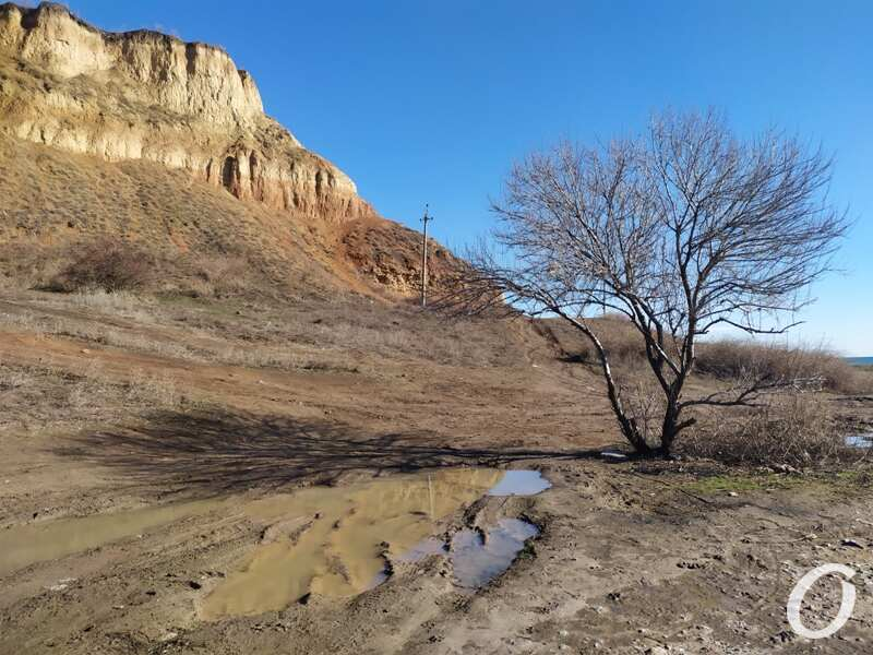 мыс Большой Фонтан, дерево