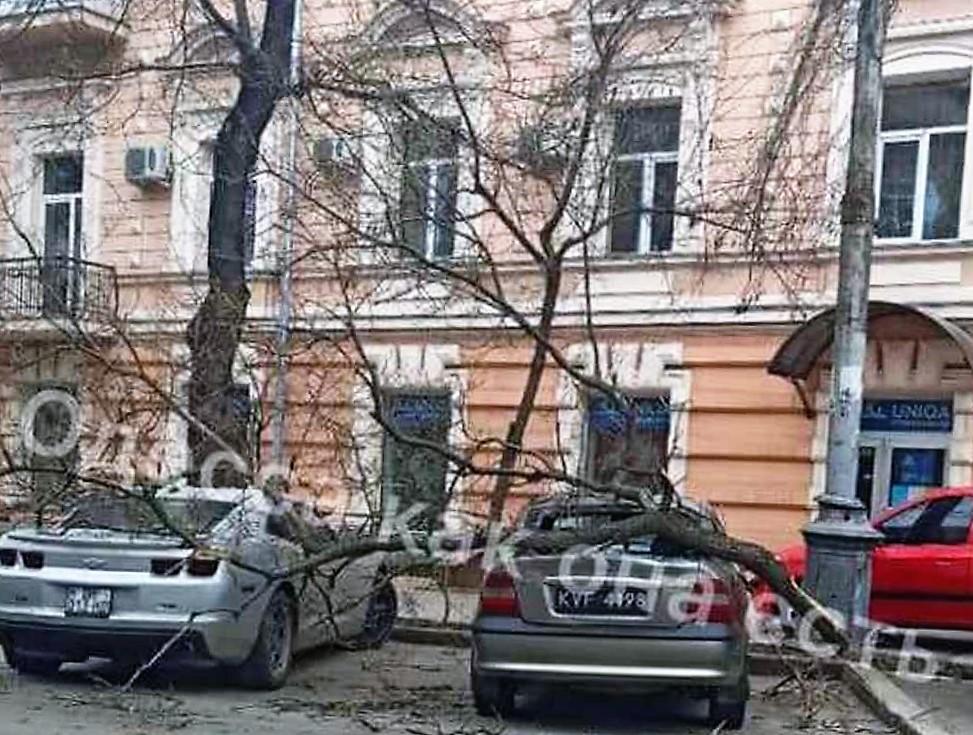 Непогода в Одессе, упало дерево