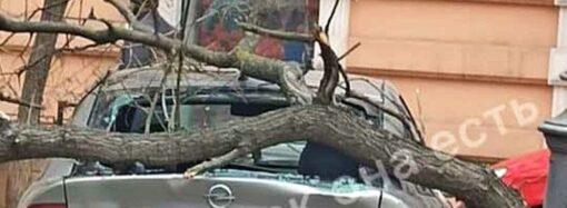 Непогода в Одессе: на Пастера дерево «грохнуло» по припаркованному авто (фото)