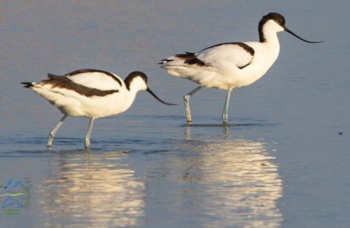 В заповеднике под Одессой заметили редких птиц