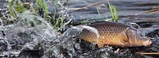 В водоемах Одесчины нельзя будет рыбачить до конца июня