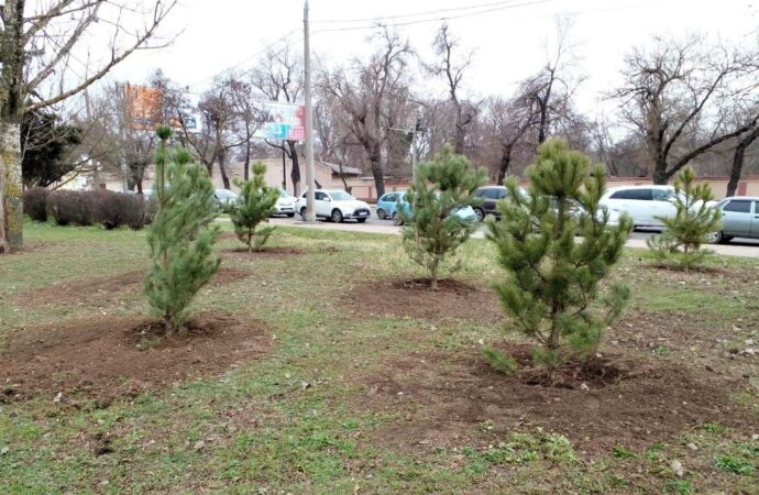 На одесском Крымском бульваре высадят 140 молодых сосен