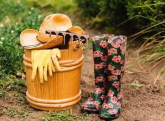 Что нужно сделать на даче весной: виноград, картофель, земляника, защита растений
