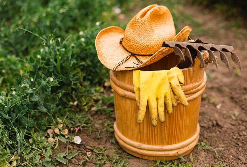 советы дача огород