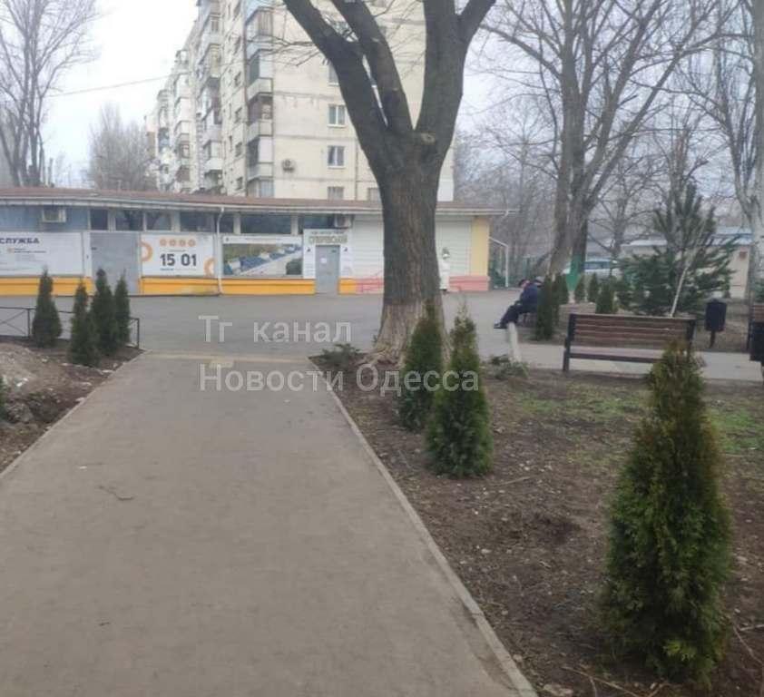 на Крымском бульваре выкопали туи