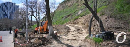 В Одессе уничтожили около сотни деревьев возле Трассы здоровья (видео)