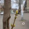 Весна по-одесски: как расцветает город – фоторепортаж