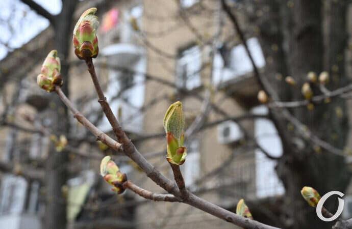 Погода в Одессе 16 апреля: быть ли в пятницу дождю?