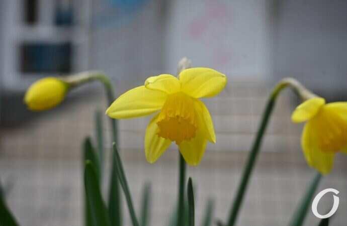 Погода в Одессе: каким будет последний день апреля?