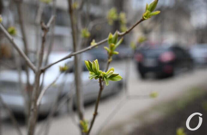 Погода 13 апреля: чем порадует одесситов весенний вторник?