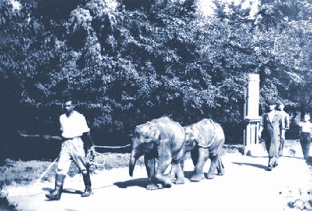 Одесский зоопарк в годы войны