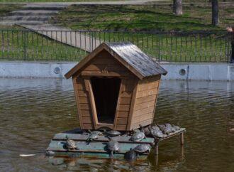 В одесский парк Победы вернулись красноухие черепахи и лебедь (фото)