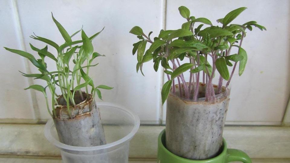 Посев семян в пипифаксе