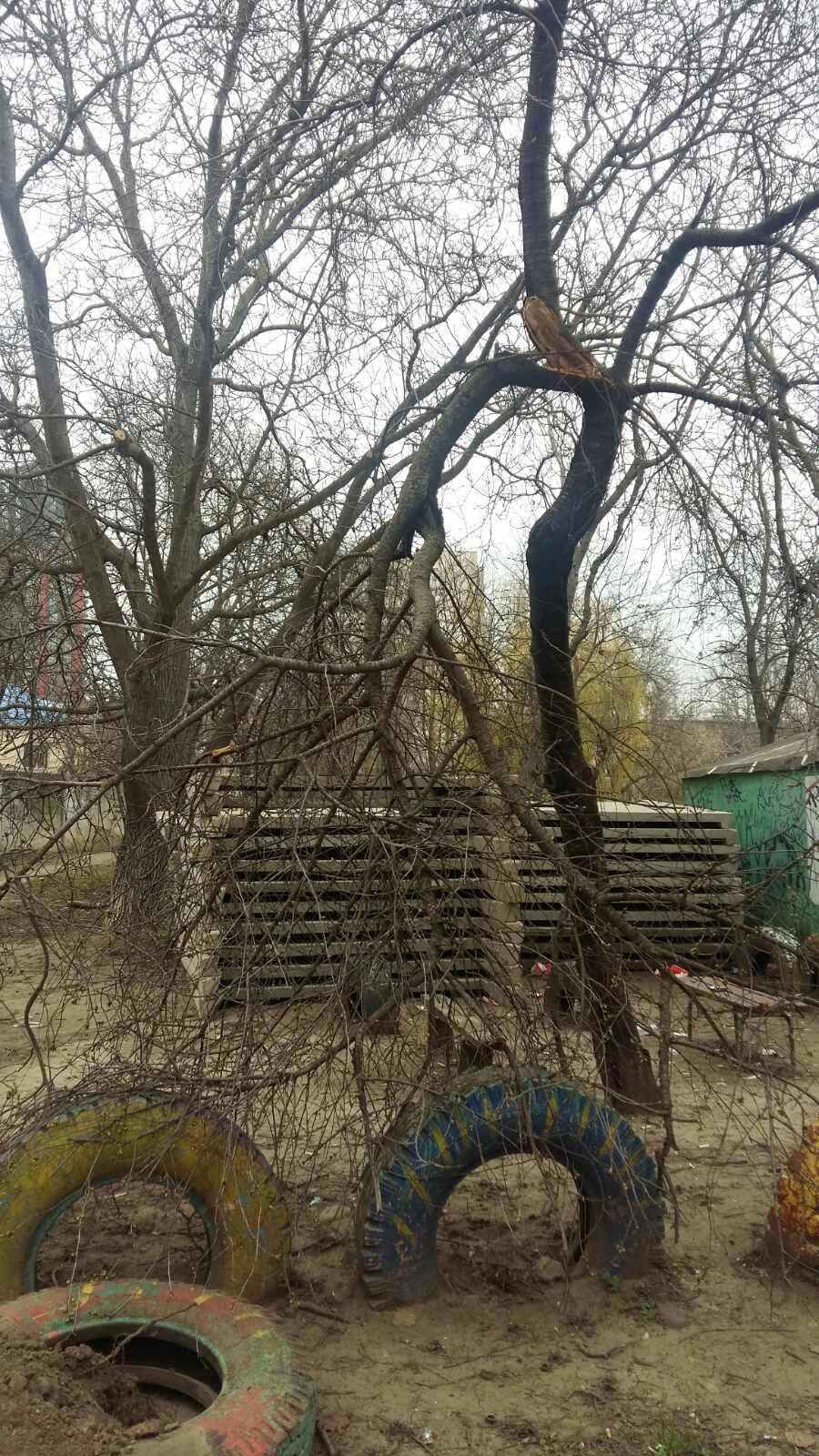 ситуация на Варненской, дерево