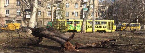Кто должен спиливать аварийные деревья в Одессе?