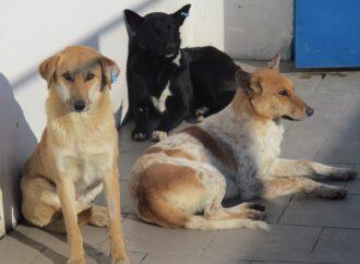 Как в Одессе отлавливают и стерилизуют бездомных животных?