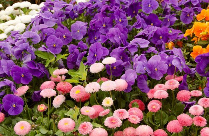 В Одессе хотят высадить 200 тысяч весенних цветов (видео)