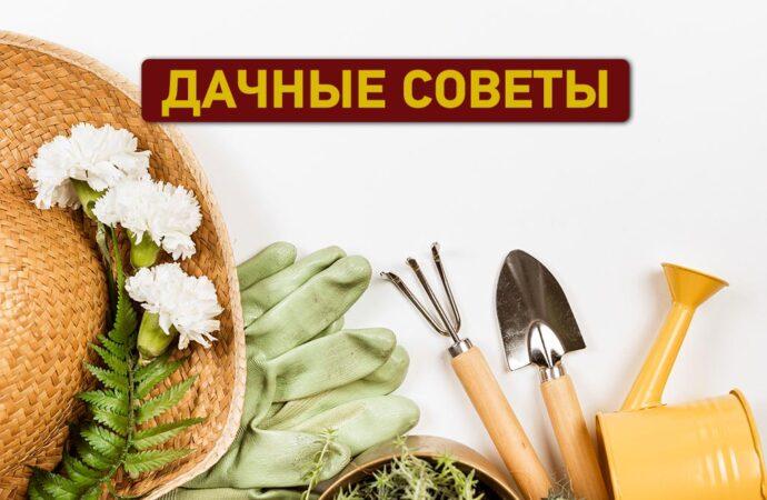 Дачные советы: что нужно успеть в апреле сделать в саду, огороде и цветнике