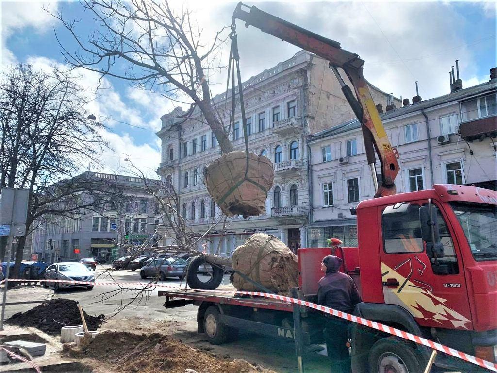 высадка деревьев на Греческой