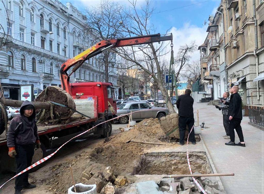 в Одессе высаживают Адамовы деревья