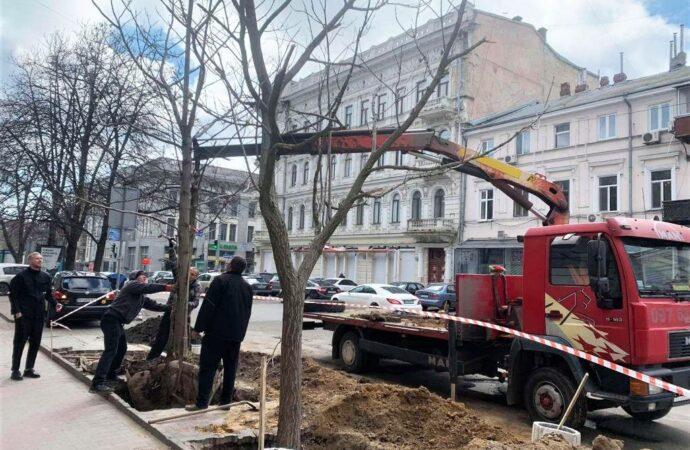 Посадка по-одесски: на Греческой появились Адамовы деревья (фото)