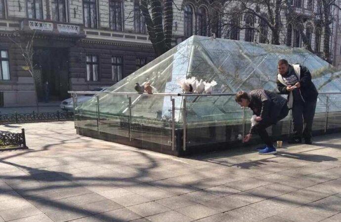 В центре Одессы у «фотобизнесменов» отобрали голубей со склеенными крыльями