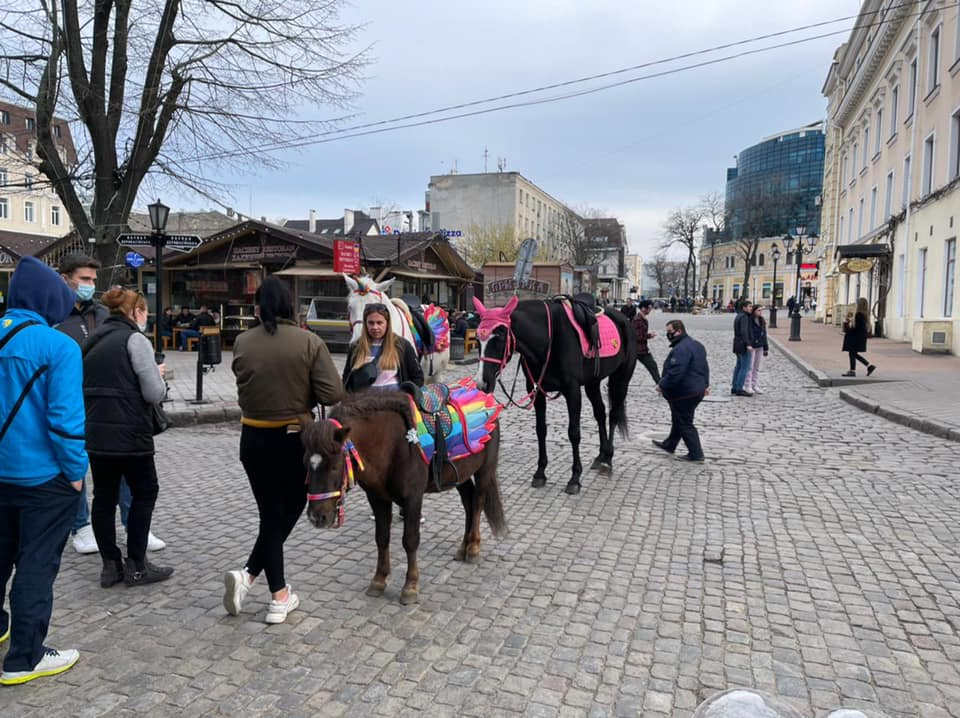 выгул лошадей на Дерибасовской2
