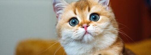 Анекдот дня: о кошачьих забавах