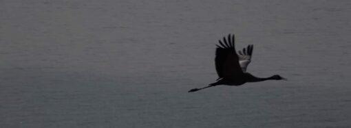 Пограничники показали эксклюзивные фото птиц с острова Змеиный
