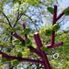 В одесском Греческом парке выросло необычное дерево (фото)