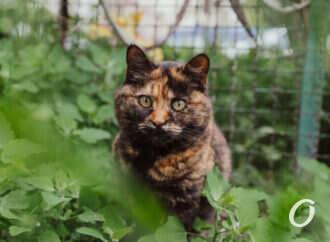 Одесса после весенних ливней: цветы, коты и «ванильное» небо – фоторепортаж