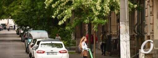 Новости про 1000 акаций в Одессе: высадят уже взрослые деревья