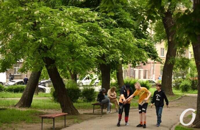 Зеленая Одесса: в городе высадят почти 20 тысяч саженцев