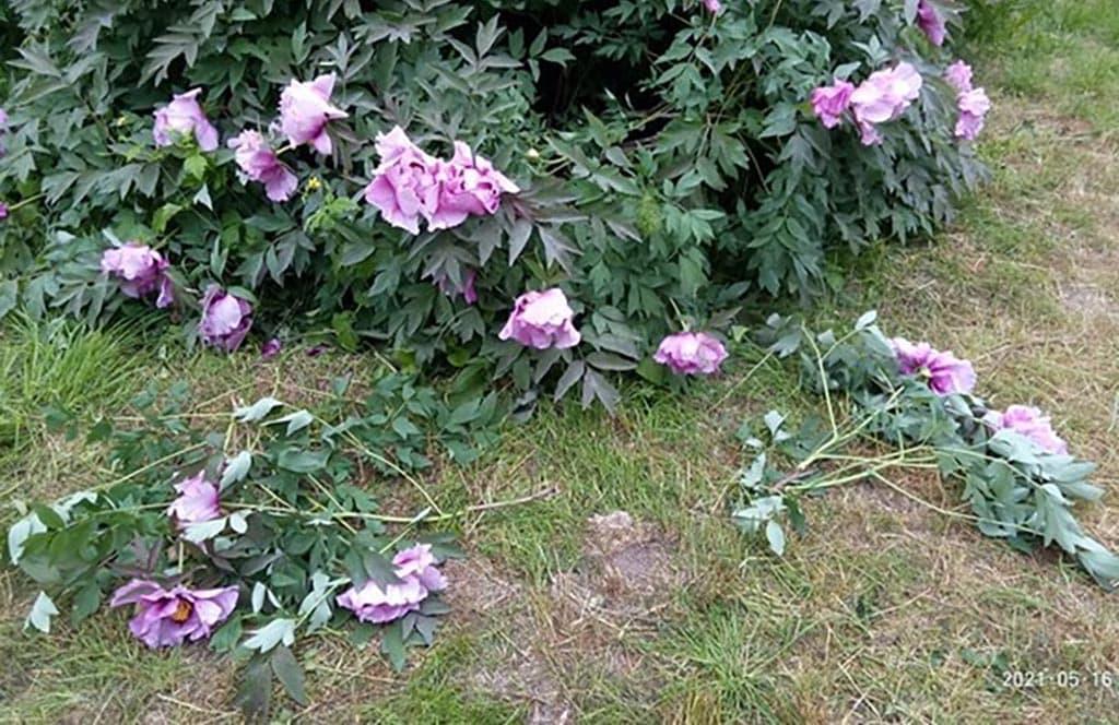 вандалы Одесский ботанический сад
