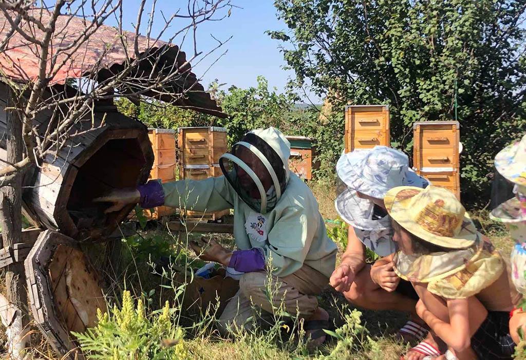 экопоселение ульи пчелы