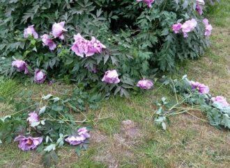 В Одесском ботсаду пожаловались на невежественных посетителей
