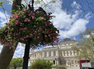 Одессу украсят 200 ваз с петуниями