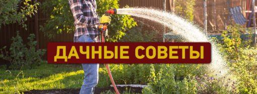 Дачные советы: полезные работы в мае на винограднике и в огороде